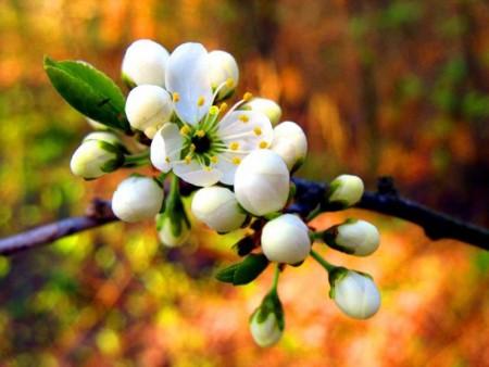 زهور (4)