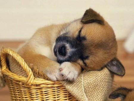 صورة كلاب (2)