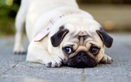 صورة كلاب (3)