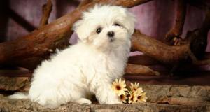 صورة كلب (1)