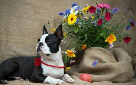 صورة كلب (2)