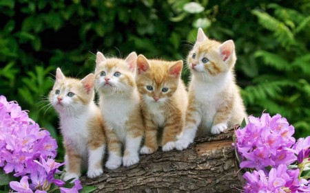 صور أجمل قطط (1)