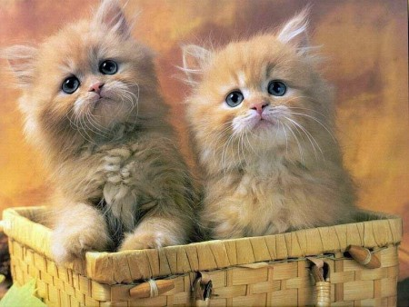 صور أجمل قطط (2)