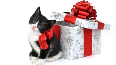 صور احلى قطط (3)