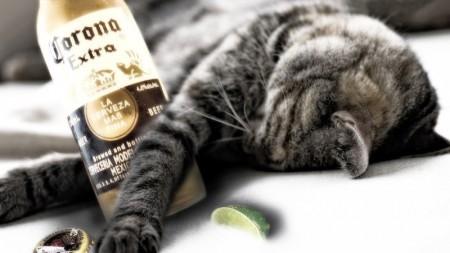 صور خلفيات قطط (2)