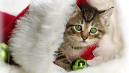 صور خلفيات قطط (3)