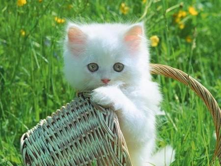 صور خلفيات قطط (4)