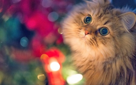 صور خلفيات قطط (5)