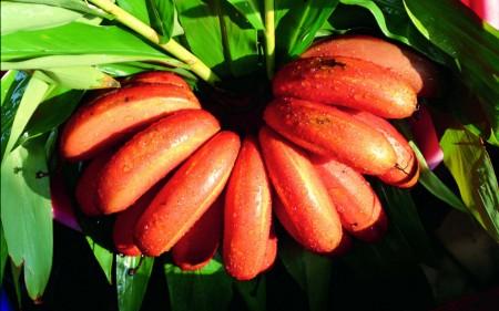 صور فاكهة الموز (1)