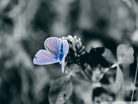 صور فراشات ملونة (4)