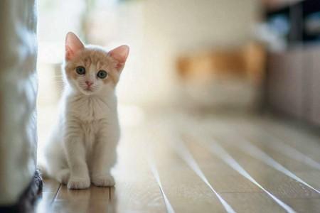 صور قطط بيضاء (7)