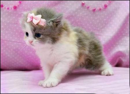 صور قطط بيضاء (8)