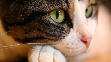 صور قطط جميلة جدا (3)