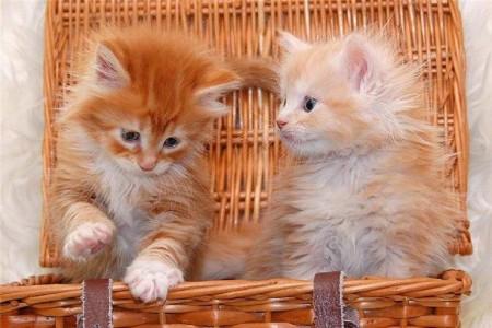 صور قطط جميلة (2)