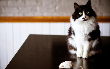 صور قطط حلوين (3)