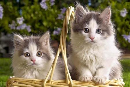صور قطط روعة (2)