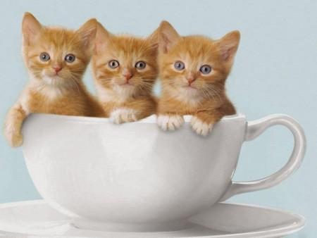 صور قطط روعة (3)