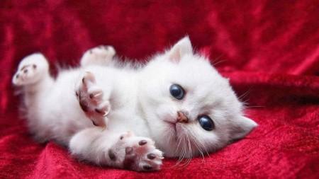 صور قطط روعة (4)