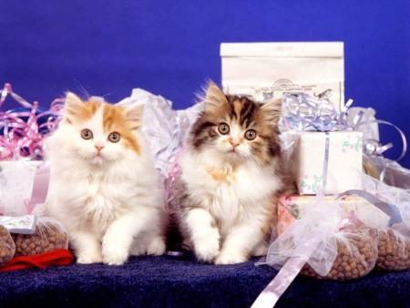 صور قطط روعة (5)