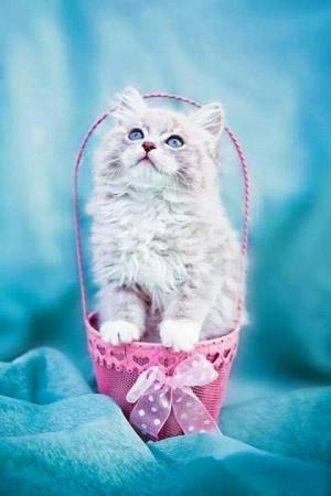 صور قطط صغار (4)