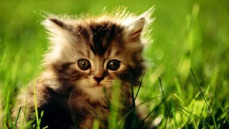 صور قطط صغيرة (1)