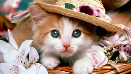 صور قطط صغيرة (3)