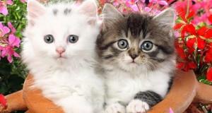 صور قطط صغيرة (4)