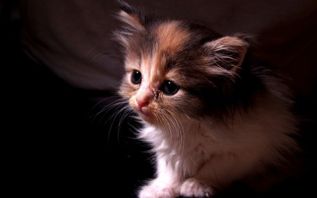 صور قطط لطيفة (1)