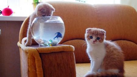 صور قطط لطيفة (2)