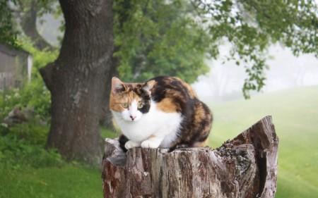 صور قطط لطيفة (3)