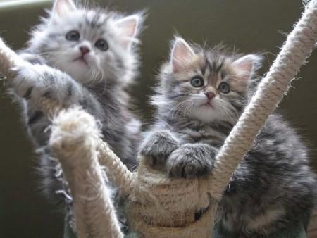 صور قطط لطيفة (4)