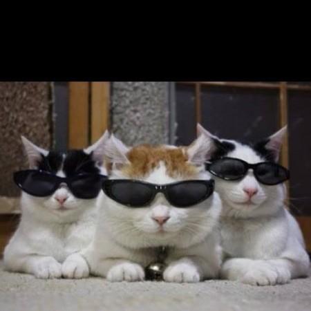 صور قطط مضحكة (2)