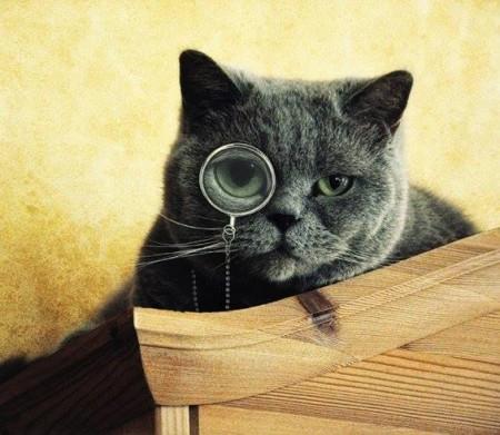 صور قطط مضحكة (3)