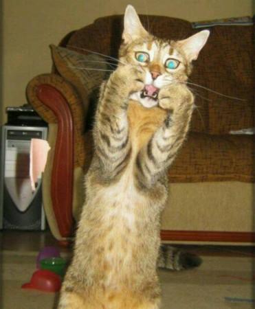 صور قطط مضحكة (7)