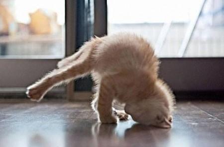 صور قطط مضحكة (8)