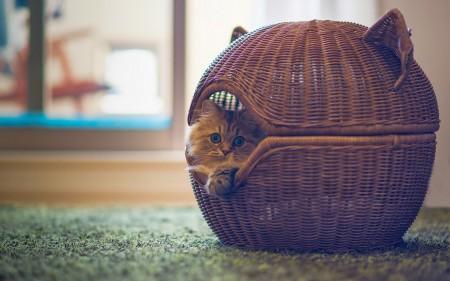 صور قطط ملونة (2)