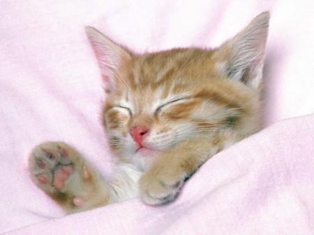 صور قطط ملونة (3)