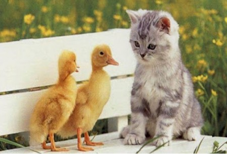 صور قطط ملونة (5)