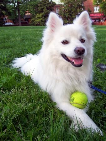 صور كلاب (2)