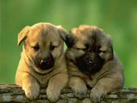 صور وخلفيات كلاب (1)