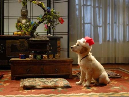 صور وخلفيات كلاب (4)