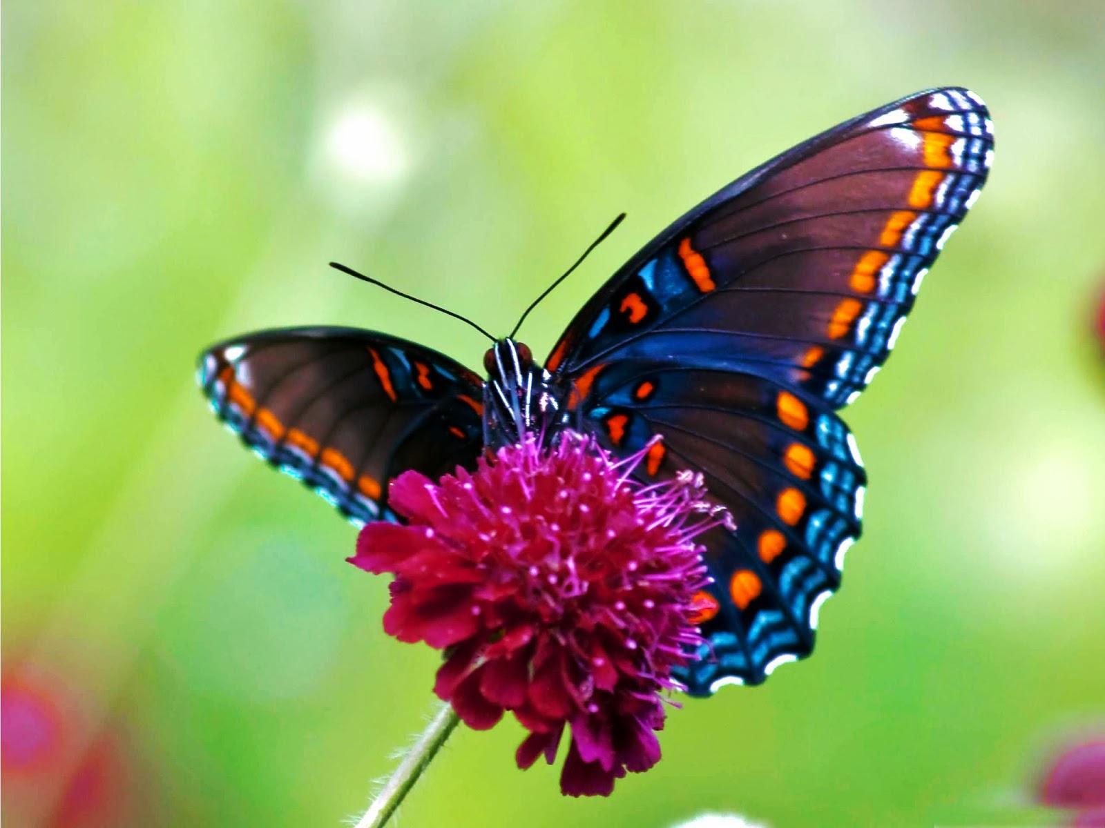 فراشات ملونة (1)