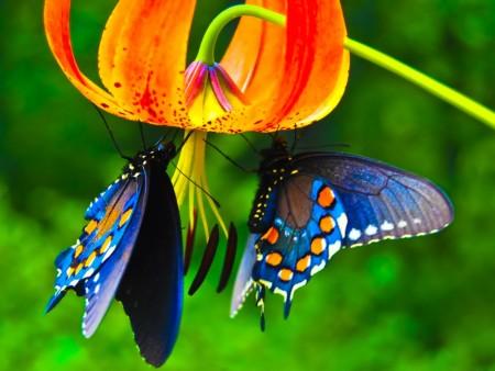 فراشات ملونة (8)