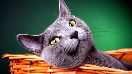 قطط بالصور (3)