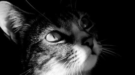 قطط بالصور (4)