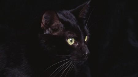 قطط (5)