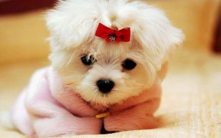 كلاب بالصور (1)