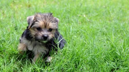 كلاب بالصور (3)