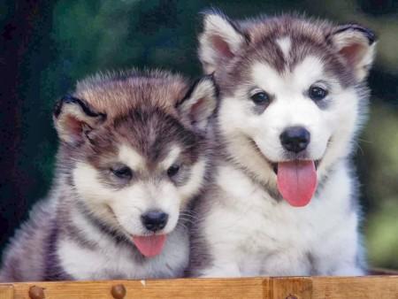كلاب (1)