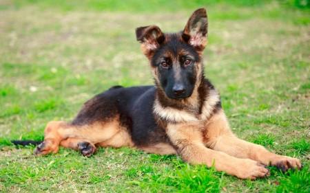 كلاب (2)